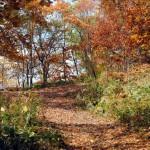 紅葉絨毯、秋深まる~親睦登山